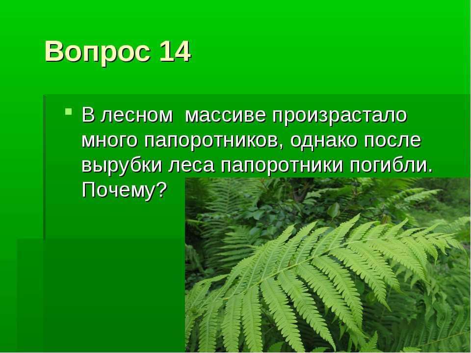 Вопрос 14 В лесном массиве произрастало много папоротников, однако после выру...