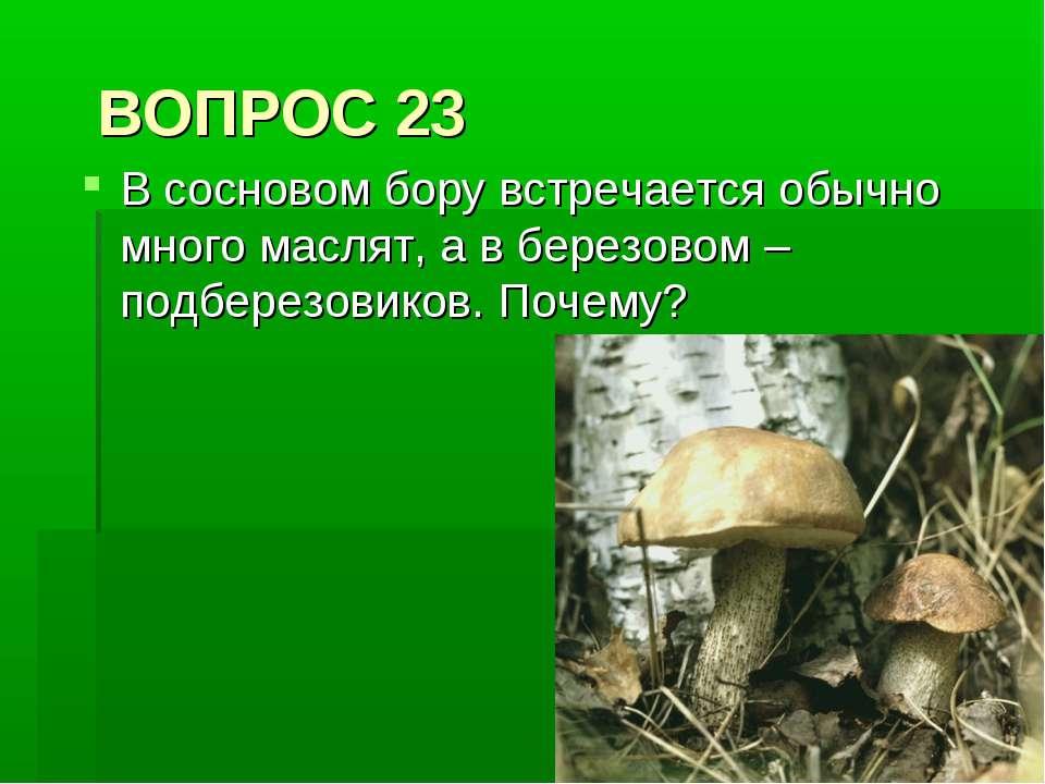 ВОПРОС 23 В сосновом бору встречается обычно много маслят, а в березовом – по...