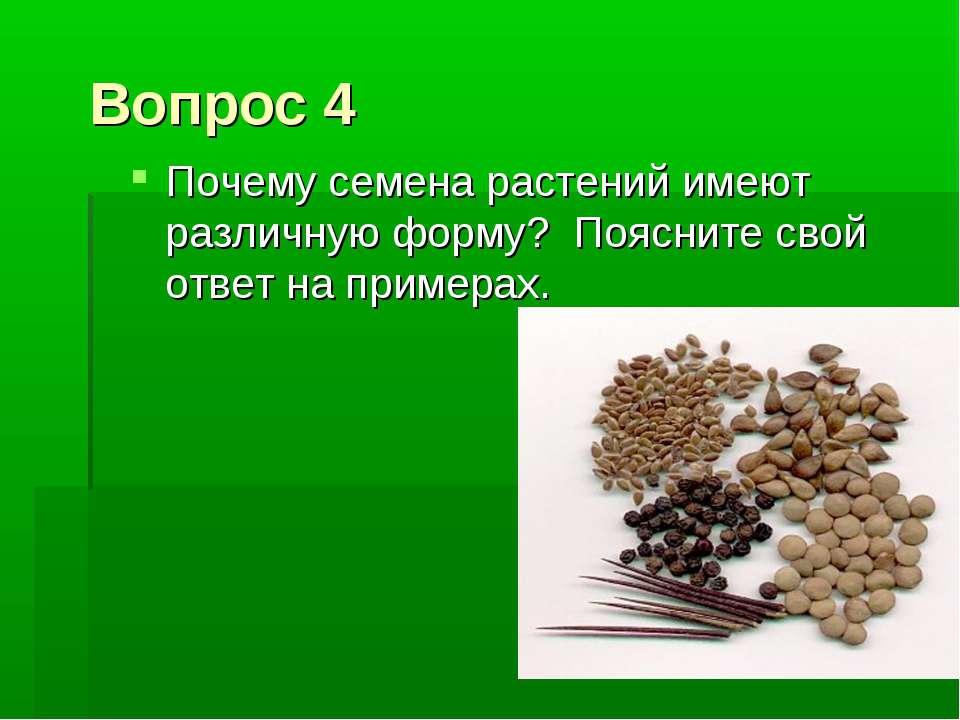 Вопрос 4 Почему семена растений имеют различную форму? Поясните свой ответ на...