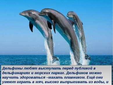 Дельфины любят выступать перед публикой в дельфинариях и морских парках. Дель...