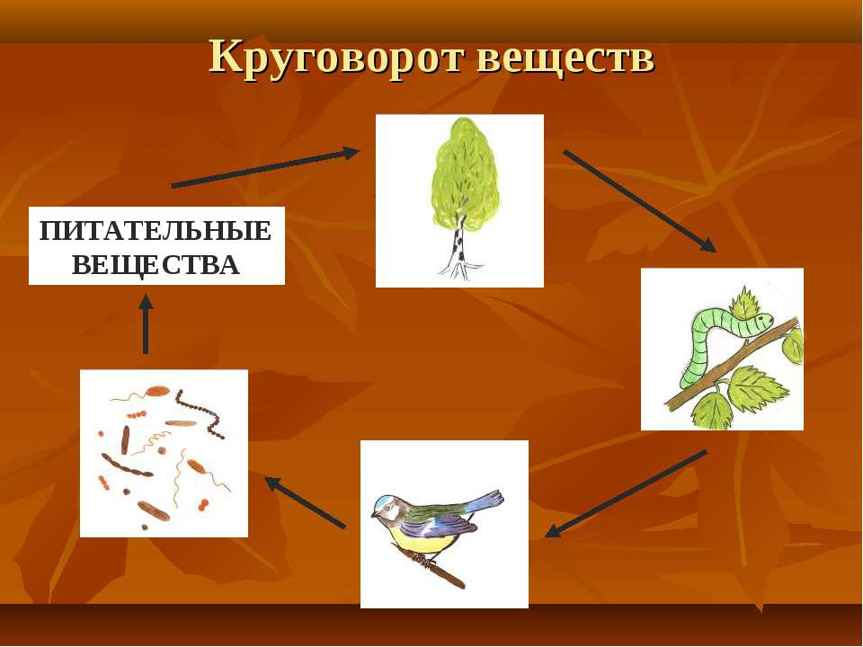 Как сделать модель круговорота веществ для 3 класса