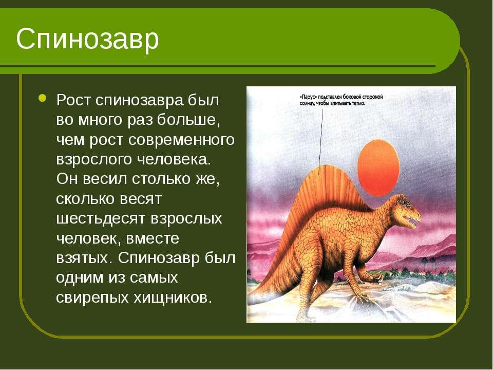 Спинозавр Рост спинозавра был во много раз больше, чем рост современного взро...
