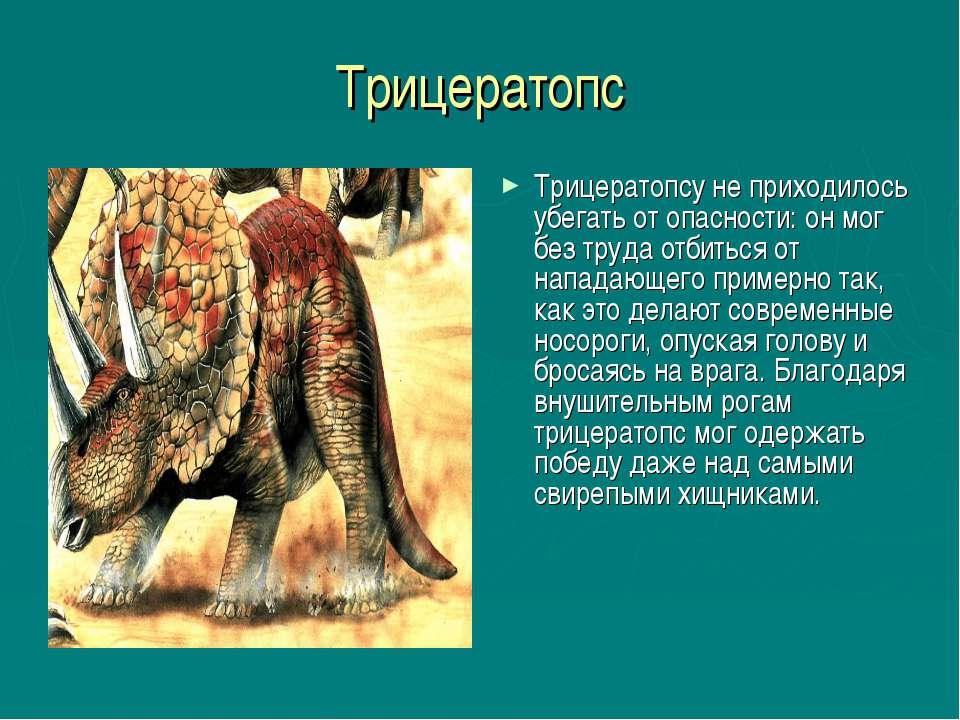 Трицератопс Трицератопсу не приходилось убегать от опасности: он мог без труд...