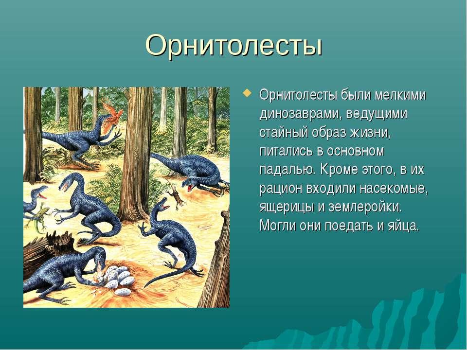Орнитолесты Орнитолесты были мелкими динозаврами, ведущими стайный образ жизн...