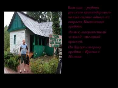Вот она - родина русского краснодарского чая на склоне одного из отрогов Кавк...
