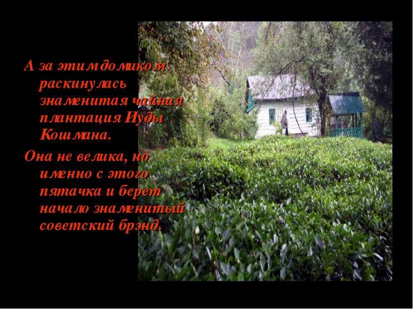 А за этим домиком раскинулась знаменитая чайная плантация Иуды Кошмана. Она н...