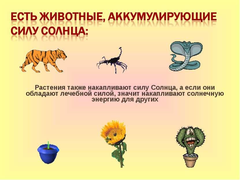 Растения также накапливают силу Солнца, а если они обладают лечебной силой, з...