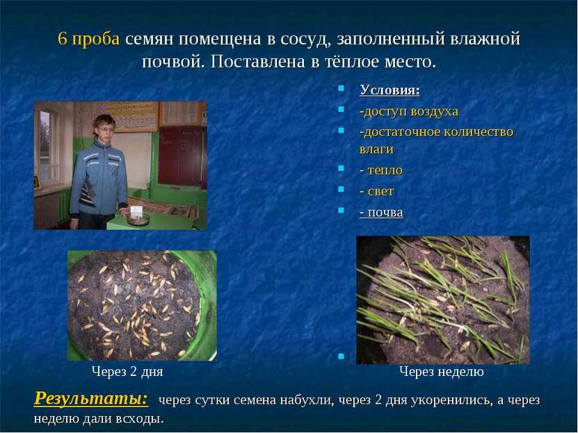 6 проба семян помещена в сосуд, заполненный влажной почвой. Поставлена в тёпл...