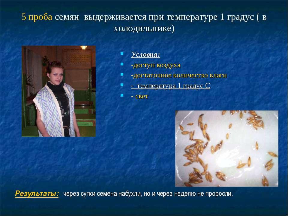 5 проба семян выдерживается при температуре 1 градус ( в холодильнике) Услови...