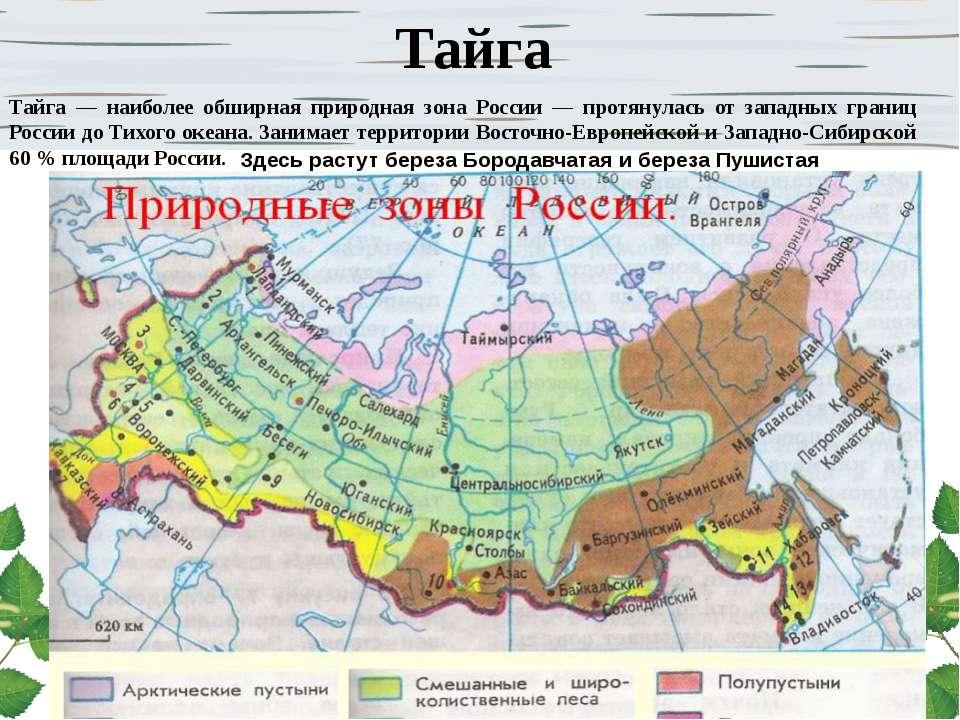 Тайга Тайга — наиболее обширная природная зона России — протянулась от западн...