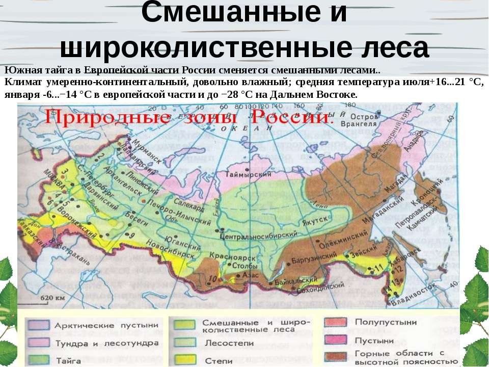 Смешанные и широколиственные леса Южная тайга в Европейской части России смен...