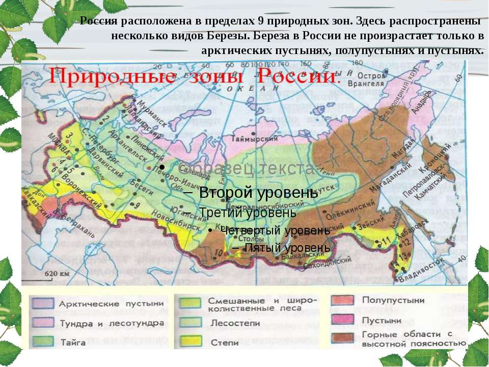 Россия расположена в пределах 9 природных зон. Здесь распространены несколько...