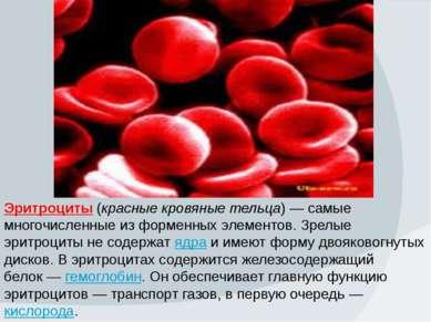 Эритроциты (красные кровяные тельца)— самые многочисленные из форменных элем...