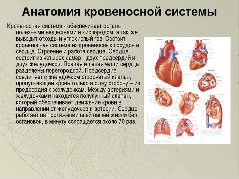 Анатомия кровеносной системы Кровеносная система - обеспечивает органы полезн...