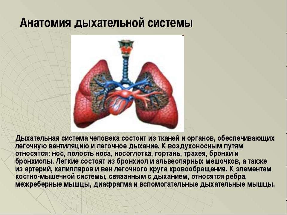 Дыхательная система человека состоит из тканей и органов, обеспечивающих лего...