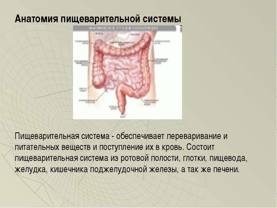 Анатомия пищеварительной системы Пищеварительная система - обеспечивает перев...