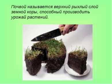 Почвой называется верхний рыхлый слой земной коры, способный производить урож...