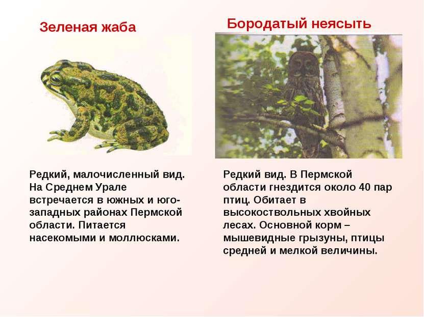 Бородатый неясыть Редкий вид. В Пермской области гнездится около 40 пар птиц....