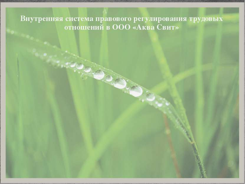 Внутренняя система правового регулирования трудовых отношений в ООО «Аква Свит»