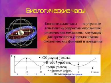 Биологические часы Биологические часы — внутренние генетически запрограммиров...