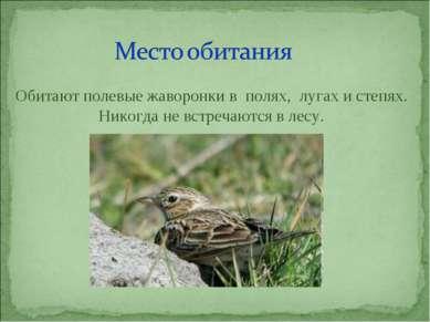 Обитают полевые жаворонки в полях, лугах и степях. Никогда не встречаются в л...