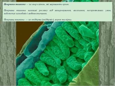 Покривна тканина — це шар клітин, які вкривають орган. Покривна тканина захищ...