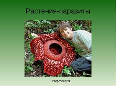 Растения-паразиты Раффлезия