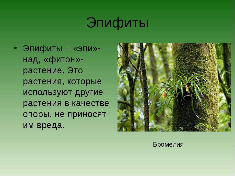 Эпифиты Эпифиты – «эпи»-над, «фитон»- растение. Это растения, которые использ...