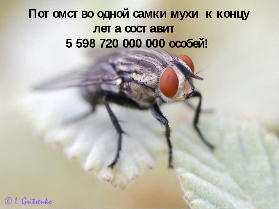 Потомство одной самки мухи к концу лета составит 5 598 720 000 000 особей!