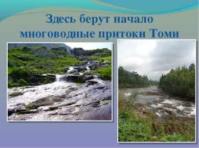 Здесь берут начало многоводные притоки Томи