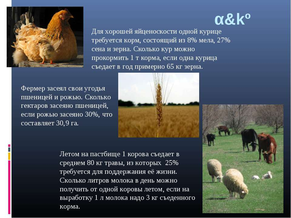 α&kº Летом на пастбище 1 корова съедает в среднем 80 кг травы, из которых 25%...