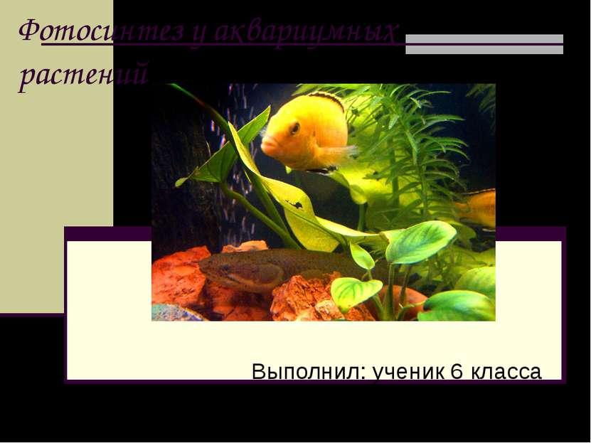 Фотосинтез у аквариумных растений Выполнил: ученик 6 класса МОУ СОШ №4 Боярки...