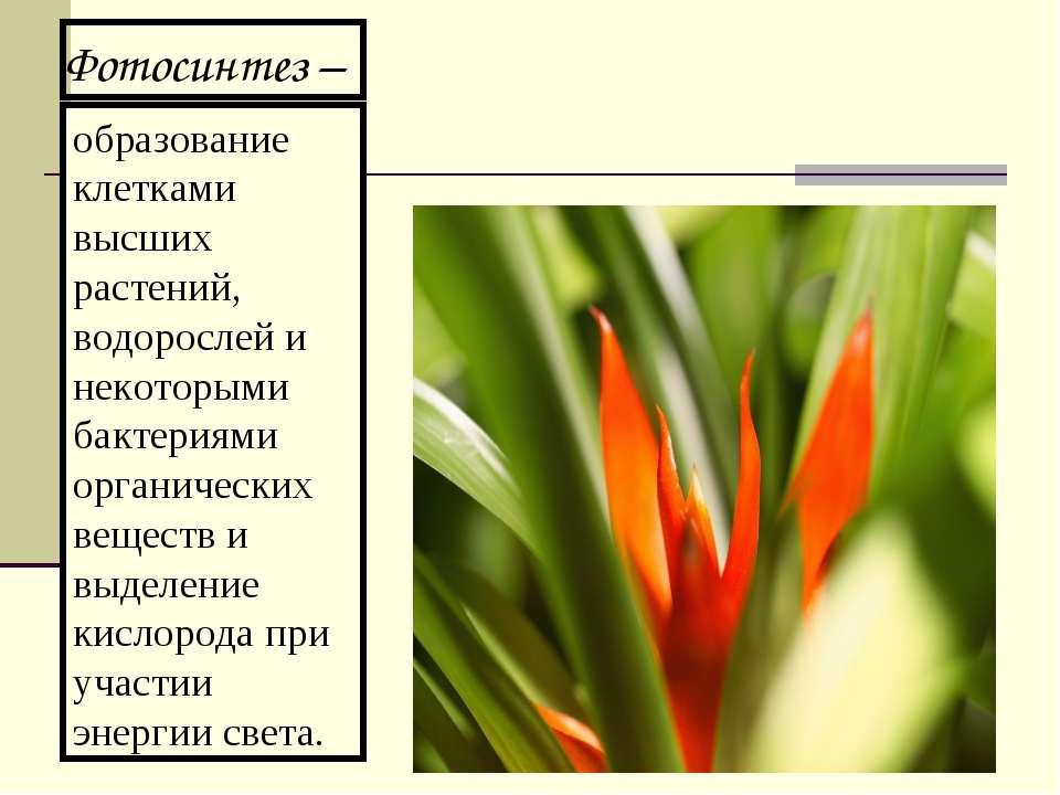 образование клетками высших растений, водорослей и некоторыми бактериями орга...