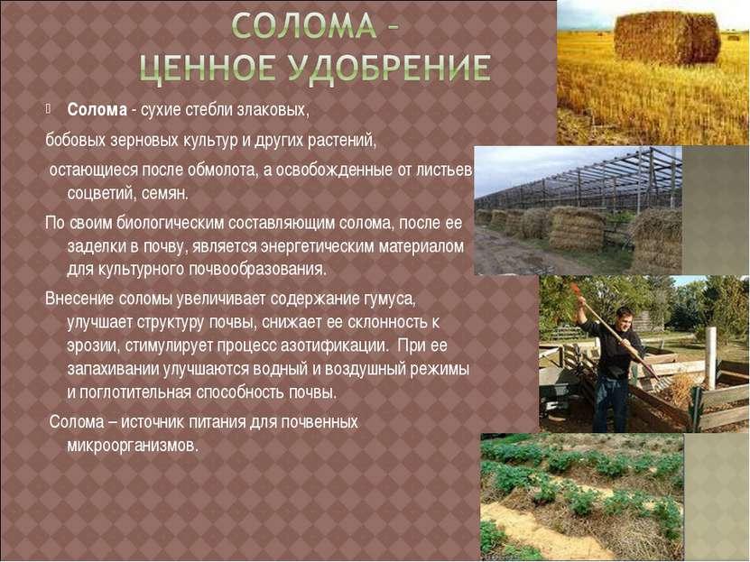 Солома - сухие стебли злаковых, бобовых зерновых культур и других растений, о...
