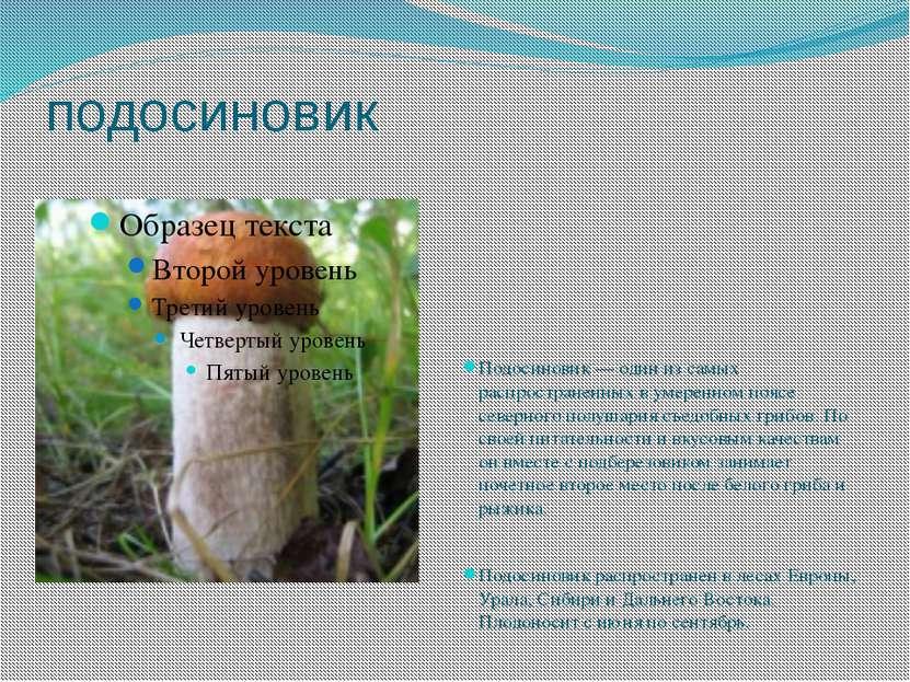 подосиновик Подосиновик — один из самых распространенных в умеренном поясе се...
