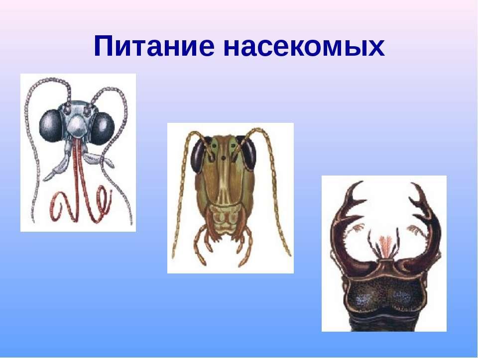 Питание насекомых