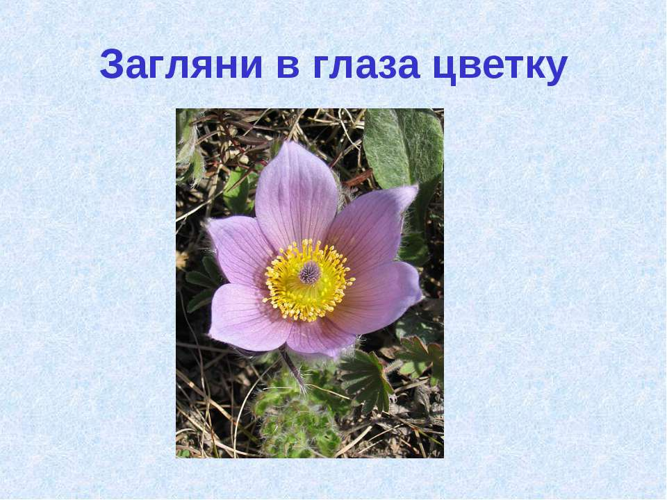 Загляни в глаза цветку