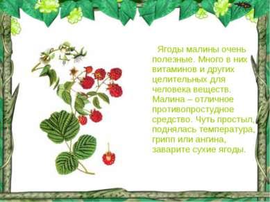 Ягоды малины очень полезные. Много в них витаминов и других целительных для ч...