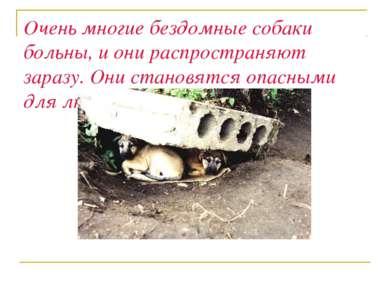 Очень многие бездомные собаки больны, и они распространяют заразу. Они станов...