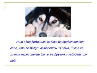 И ни одна домашняя собака не представляет себе, что её могут выбросить из дом...