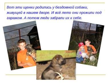 Вот эти щенки родились у бездомной собаки, живущей в нашем дворе. И всё лето ...