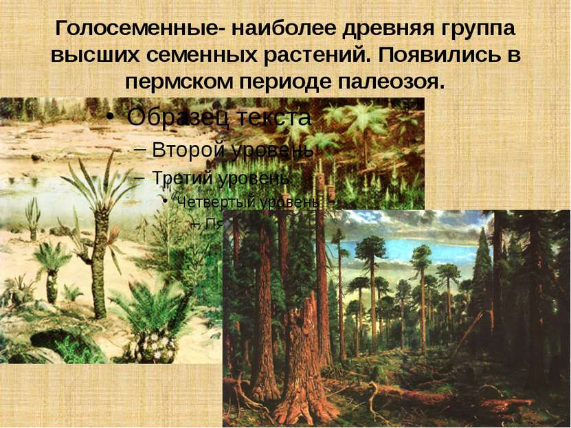 Голосеменные- наиболее древняя группа высших семенных растений. Появились в п...