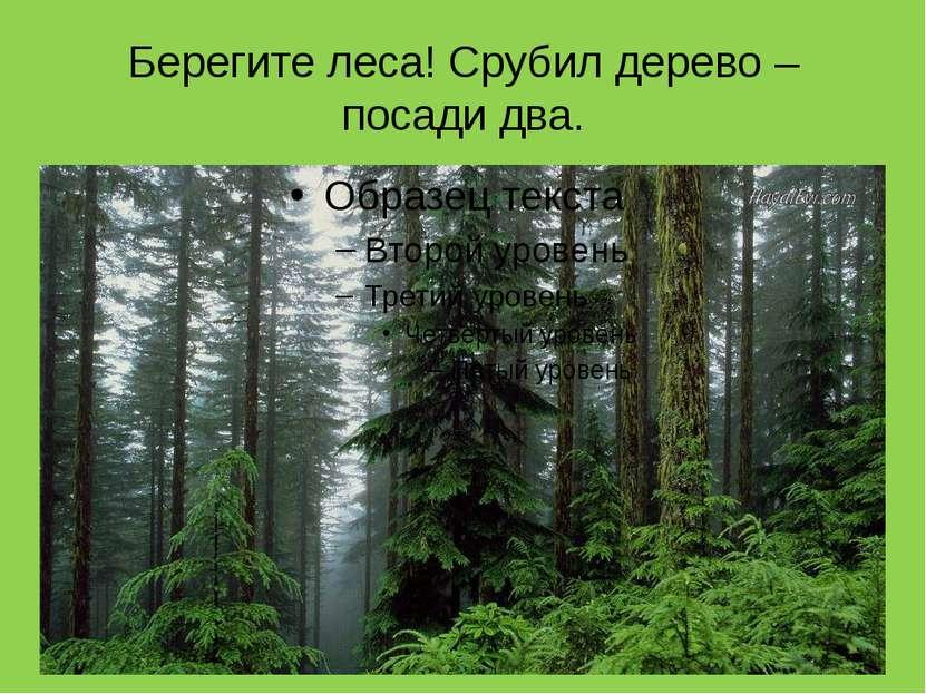 Берегите леса! Срубил дерево – посади два.