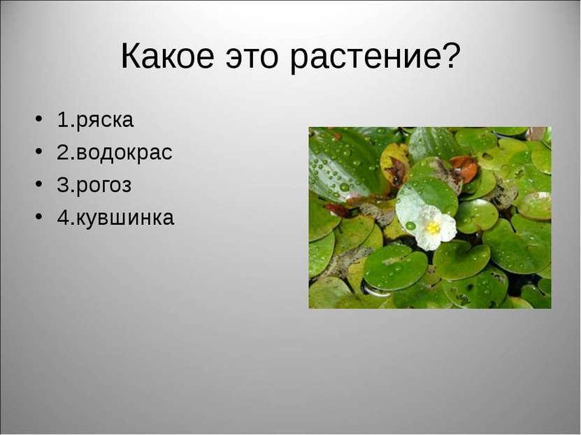 Какое это растение? 1.ряска 2.водокрас 3.рогоз 4.кувшинка