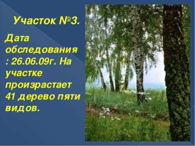 Участок №3. Дата обследования: 26.06.09г. На участке произрастает 41 дерево п...