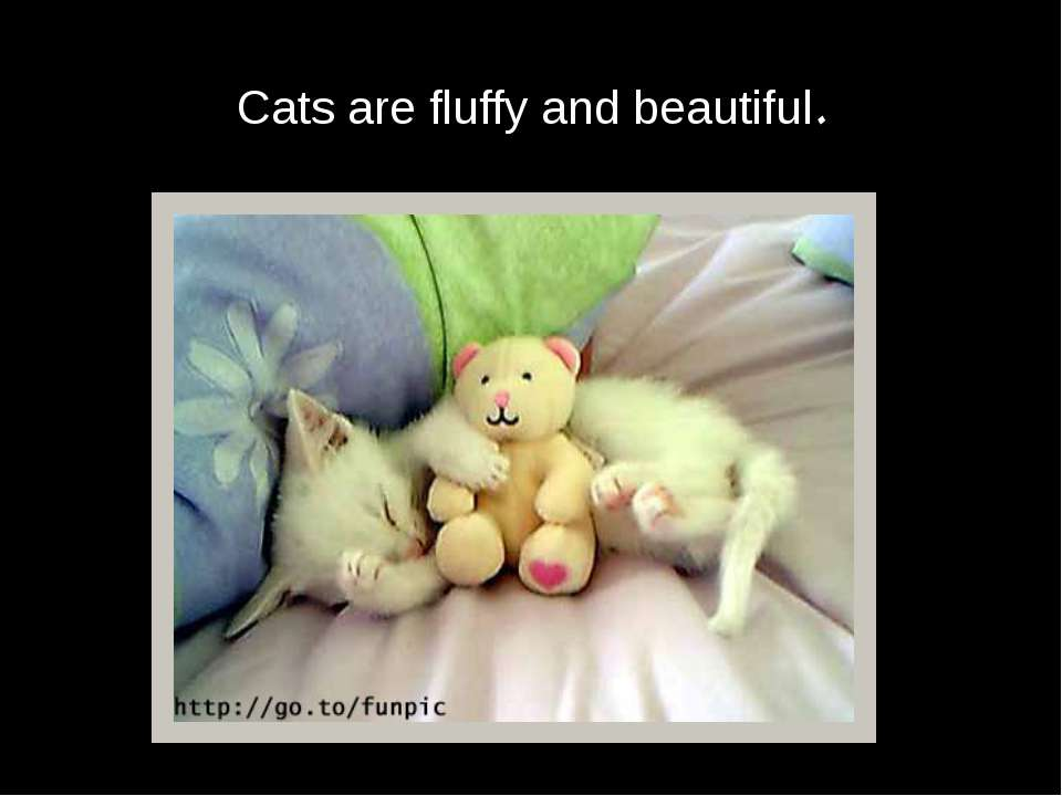 Cats are fluffy and beautiful.