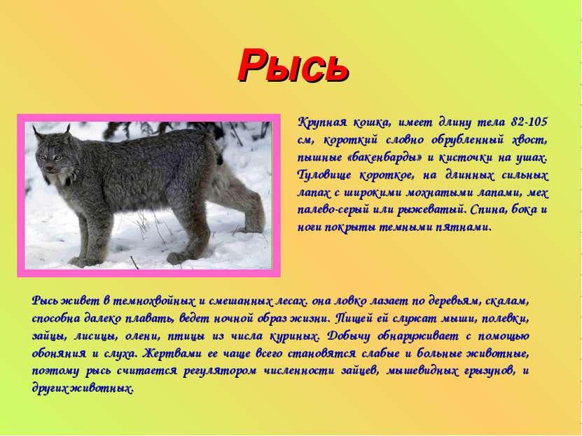 Рысь Крупная кошка, имеет длину тела 82-105 см, короткий словно обрубленный х...
