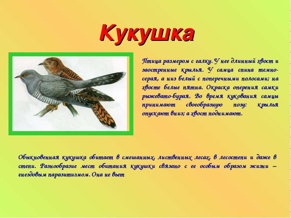 Кукушка Птица размером с галку. У нее длинный хвост и заостренные крылья. У с...