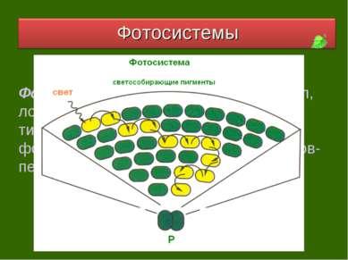Фотосистема – это комплекс молекул, локализованный в мембранах тилакоидов, со...