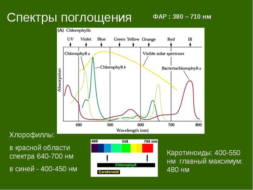 Спектры поглощения ФАР : 380 – 710 нм Каротиноиды: 400-550 нм главный максиму...